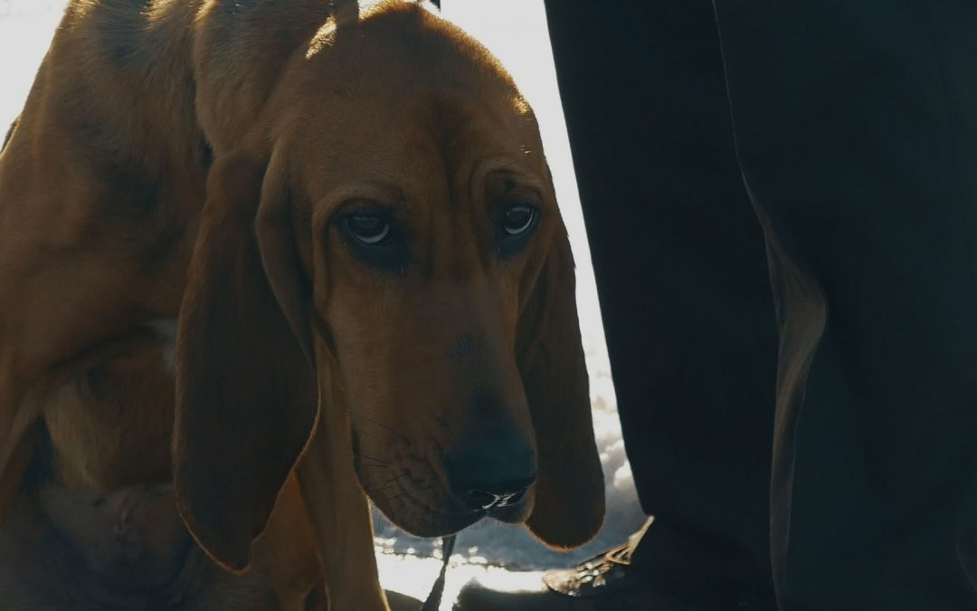 BCSO Bloodhound Program