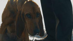 bloodhound program